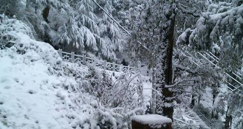 Fresh Snowfall at Jakhu