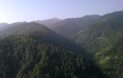 himachal forest
