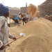 Grain storage in India