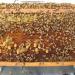 honey bees centre at palampur Univ